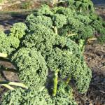 Kale Potato Leek Soup